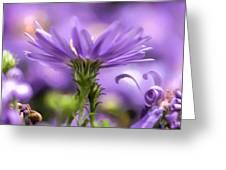 Soft lilac Greeting Card by Leif Sohlman