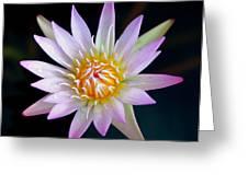 SOFT LULLABYE Greeting Card by KAREN WILES