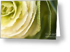 Softly Green Greeting Card by Anne Gilbert