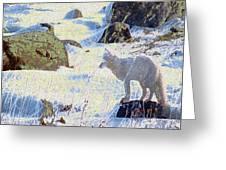 Solitary Fox Greeting Card by Alice Ramirez