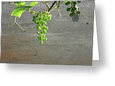 Solitary Grapes Greeting Card by Deb Martin-Webster