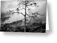 Solitary Tree Greeting Card by Dave Bowman
