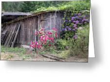 Somewhere Near Geyserville Ca Greeting Card by Joan Carroll