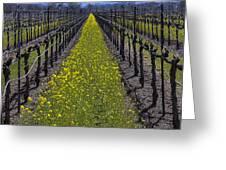 Sonoma Mustard Grass Greeting Card by Garry Gay