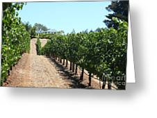 Sonoma Vineyards In The Sonoma California Wine Country 5d24507 Greeting Card by Wingsdomain Art and Photography