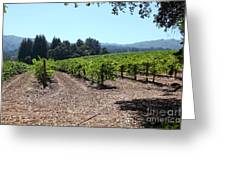 Sonoma Vineyards In The Sonoma California Wine Country 5d24511 Greeting Card by Wingsdomain Art and Photography