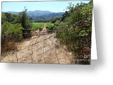 Sonoma Vineyards In The Sonoma California Wine Country 5d24520 Greeting Card by Wingsdomain Art and Photography
