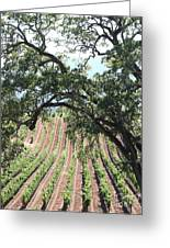 Sonoma Vineyards In The Sonoma California Wine Country 5d24619 Vertical Greeting Card by Wingsdomain Art and Photography