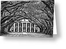 Southern Class Monochrome Greeting Card by Steve Harrington