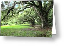 Southern Comfort Greeting Card by Silvie Kendall