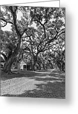 Southern Lane Monochrome Greeting Card by Steve Harrington