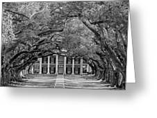 Southern Time Travel bw Greeting Card by Steve Harrington