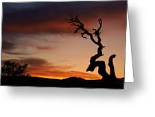 Southwest Tree Sunset Greeting Card by Michael J Bauer