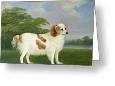 Spaniel In A Landscape Greeting Card by John Nott Sartorius