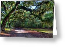 Spanish Moss Greeting Card by Mel Steinhauer
