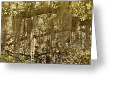 Spanish Moss On Live Oaks Greeting Card by Christine Till