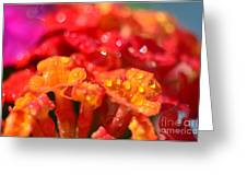 Sparkling Jeweltone Floral II Greeting Card by Debbie Portwood