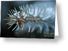Sparkling Pine Greeting Card by Darren Fisher