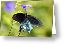 Spicebush Swallowtail Butterfly In Pastel Greeting Card by Suzanne Gaff