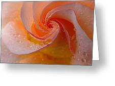 Spiral Rose Greeting Card by Juergen Roth