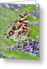 Spotted Butterfly Greeting Card by Kim Bemis