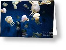 Spotted Jelly Fish 5d24951 Greeting Card by Wingsdomain Art and Photography