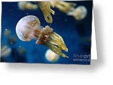 Spotted Jelly Fish 5d24955 Greeting Card by Wingsdomain Art and Photography
