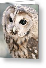 Spotted Owl Greeting Card by Shoal Hollingsworth