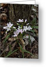 Spring Beauty Greeting Card by Sara  Raber