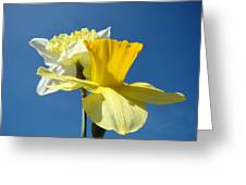 Spring Blue Sky Yellow Daffodil Flowers Art Prints Greeting Card by Baslee Troutman