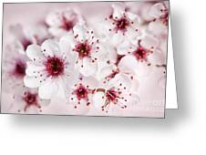 Spring Cherry Blossom Greeting Card by Elena Elisseeva
