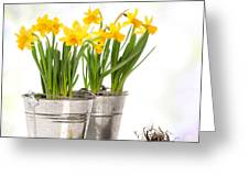 Spring Daffodils Greeting Card by Amanda And Christopher Elwell