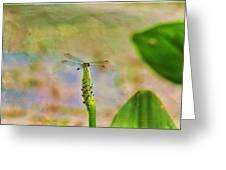 Spring Damsel Greeting Card by Deborah Benoit