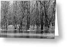 Spring Flooding Greeting Card by Sophie Vigneault