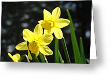Spring Floral Art Prints Glowing Daffodils Flowers Greeting Card by Baslee Troutman