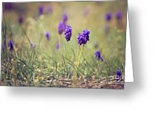 Spring Flowers Greeting Card by Diana Kraleva