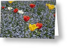 Spring  Garden  Greeting Card by Paul Felix