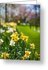 Spring In Holland. Garden Keukenhof Greeting Card by Jenny Rainbow