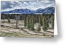 Spring In The Wallowas Greeting Card by Adele Buttolph