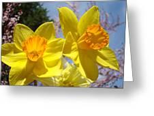 Spring Orange Yellow Daffodil Flowers Art Prints Greeting Card by Baslee Troutman