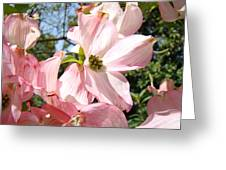 Spring Pink Dogwood Floral Art Prints Flowers Greeting Card by Baslee Troutman