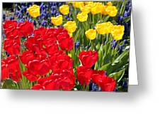 Spring Sunshine Greeting Card by Carol Groenen