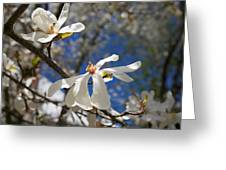 Spring Trees 1 Greeting Card by Allan Morrison