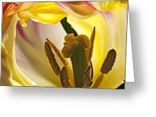 Spring Tulip Greeting Card by Inge Riis McDonald