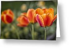 Spring Tulips Greeting Card by Adam Romanowicz