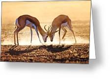 Springbok Dual In Dust Greeting Card by Johan Swanepoel