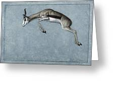 Springbok Greeting Card by James W Johnson