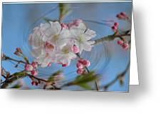 Springing Blossoms Greeting Card by Sonali Gangane