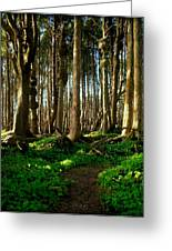 Spruce Burl Forest Greeting Card by Christopher Fridley