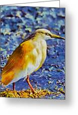 Squacco Heron Greeting Card by George Rossidis